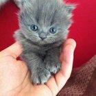 cute-kittens-2016-2