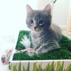 cute-kittens-2016-22