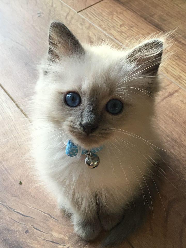 cute-kittens-2016-23