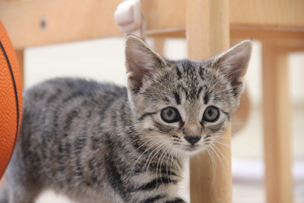 cute-kittens-2016-26