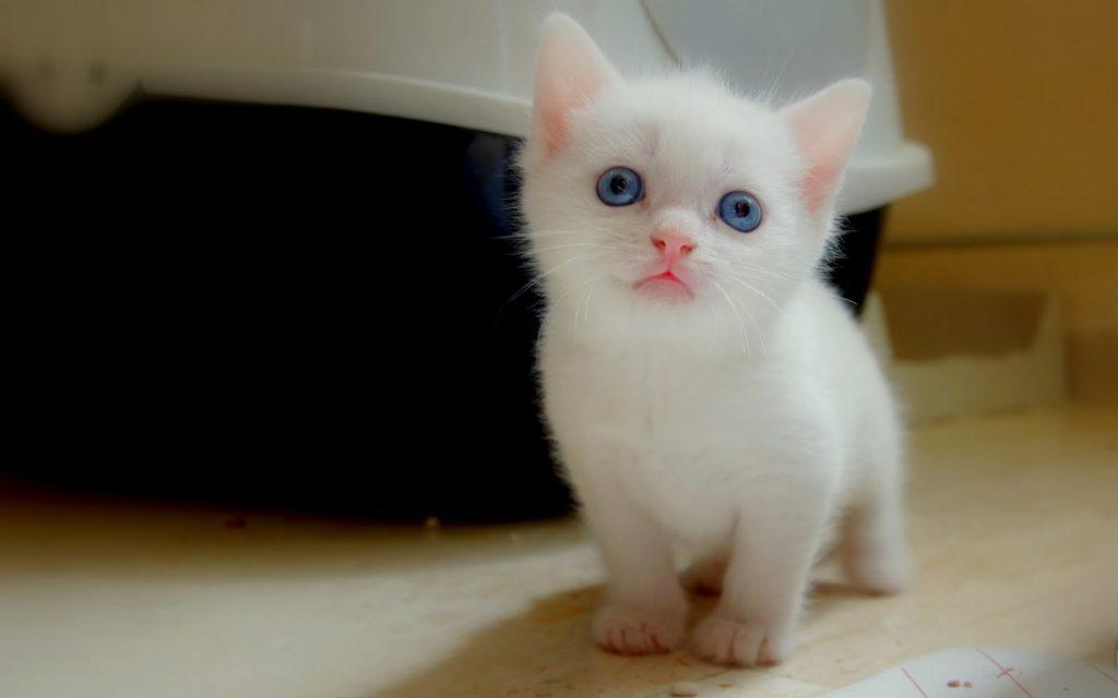 cute-kittens-2016-3