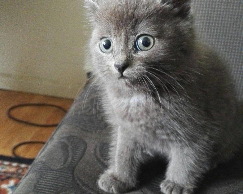 cute-kittens-2016-6