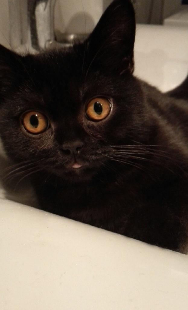 cute-kittens-2016-8