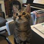 cute-kittens-2016-9