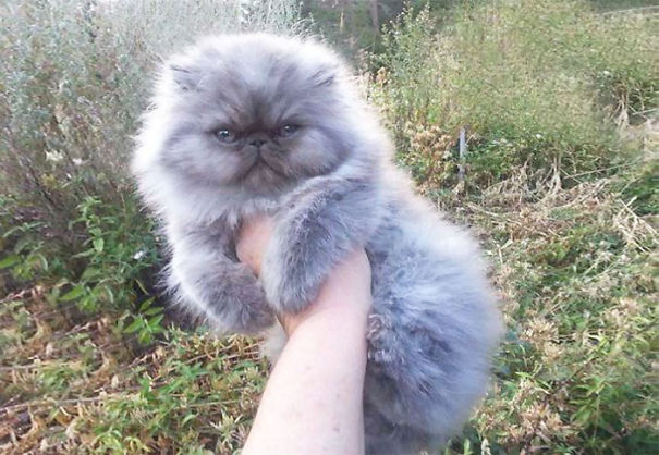 fluffy-cats-funny-animal-pics-16