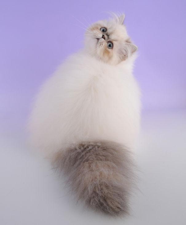 fluffy-cats-funny-animal-pics-21