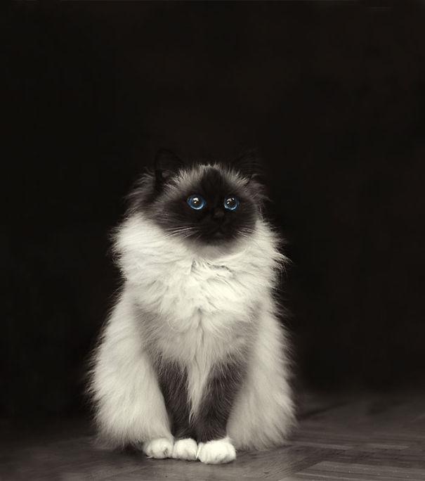 fluffy-cats-funny-animal-pics-3