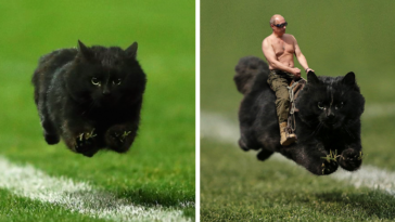 flying-cat-rugby-game-photoshop-battle-fb