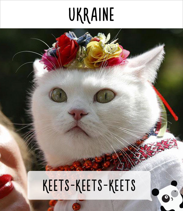 how-people-call-cats-in-different-countries-10