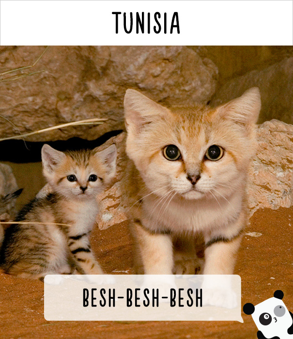 how-people-call-cats-in-different-countries-14