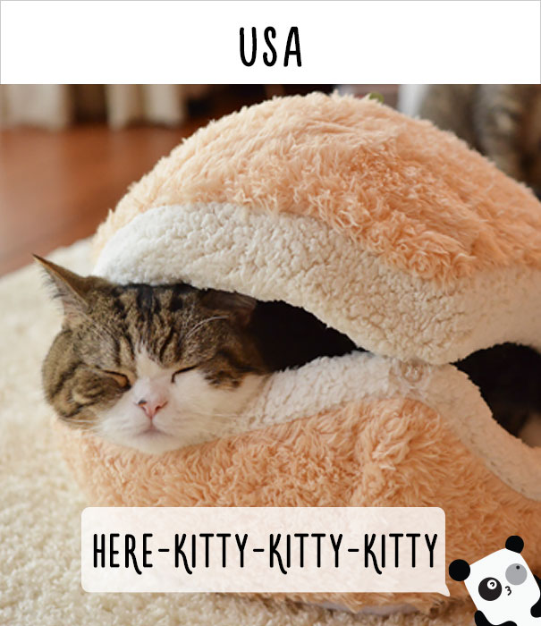 how-people-call-cats-in-different-countries-15