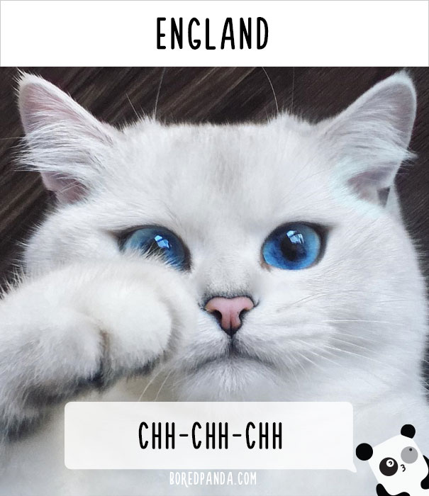 how-people-call-cats-in-different-countries-16