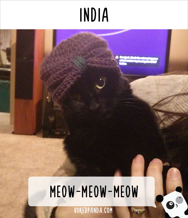 how-people-call-cats-in-different-countries-18