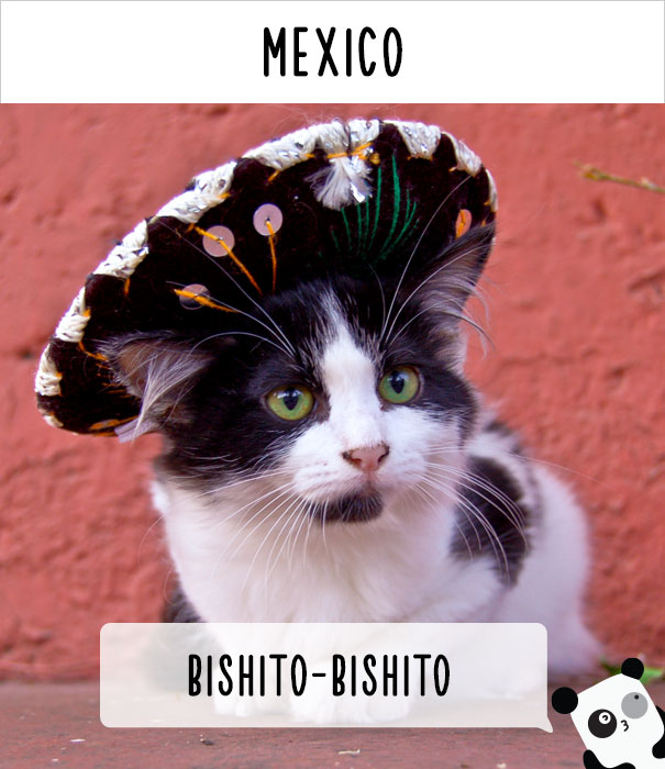 how-people-call-cats-in-different-countries-22