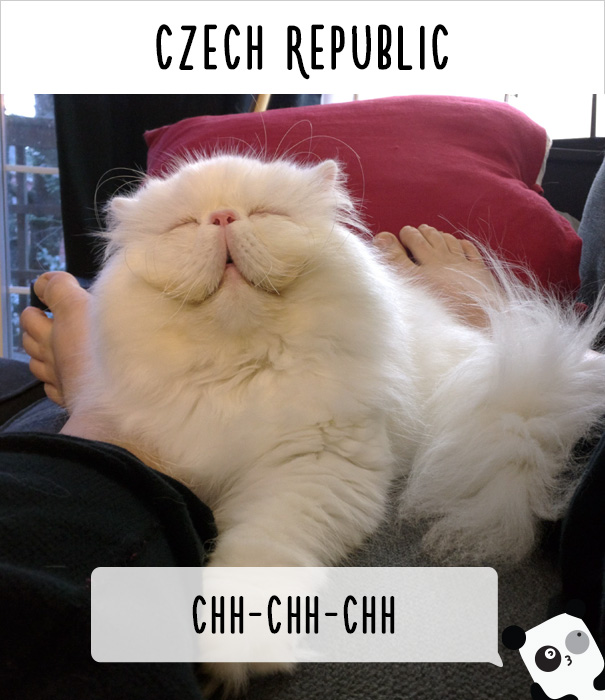 how-people-call-cats-in-different-countries-23
