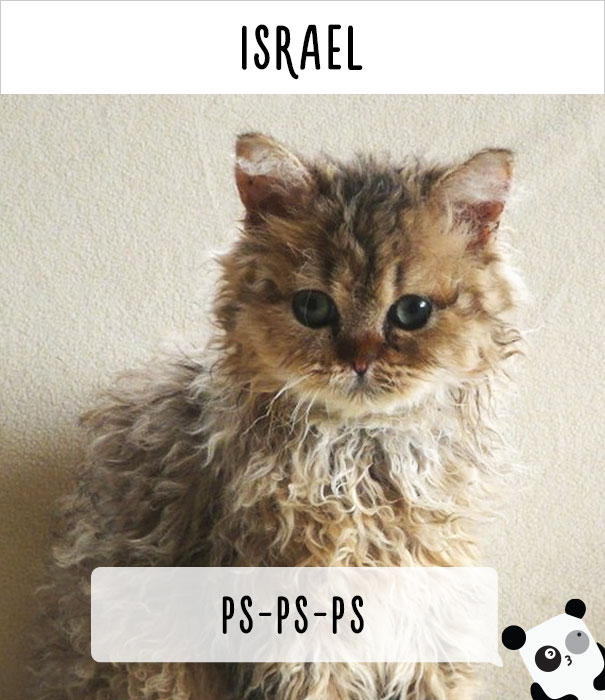 how-people-call-cats-in-different-countries-24