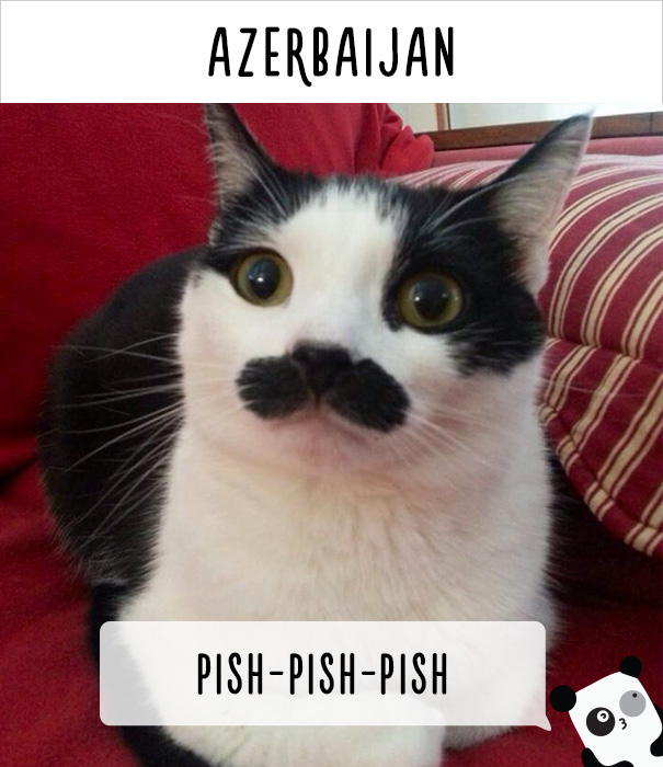 how-people-call-cats-in-different-countries-25