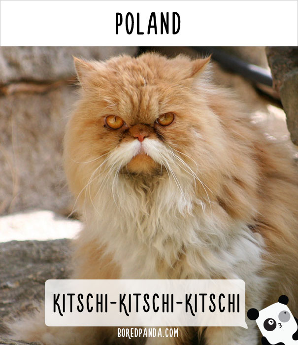 how-people-call-cats-in-different-countries-4