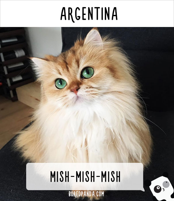 how-people-call-cats-in-different-countries-7