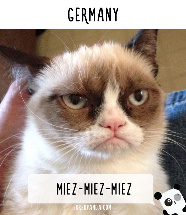 how-people-call-cats-in-different-countries-9