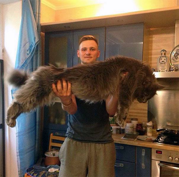 maine-coon-cats-22