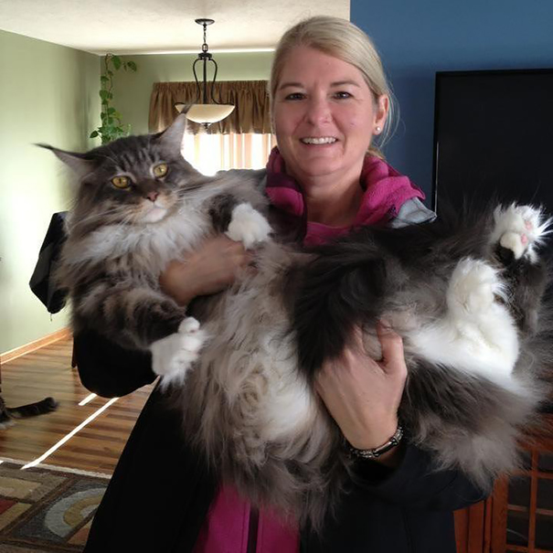 maine-coon-cats-9