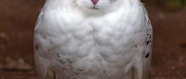 meowls-1