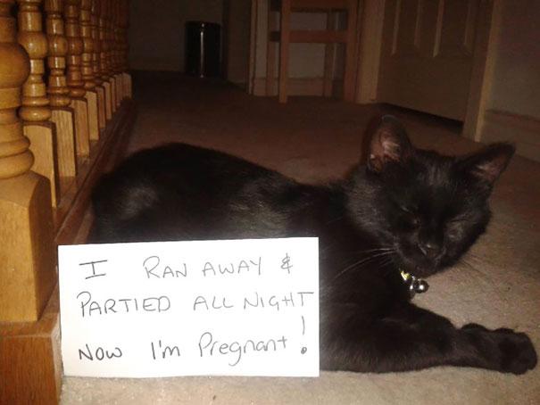 naughty-cats-04