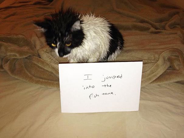 naughty-cats-10