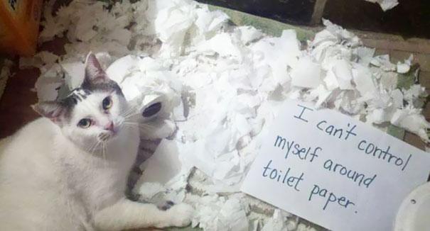 naughty-cats-11