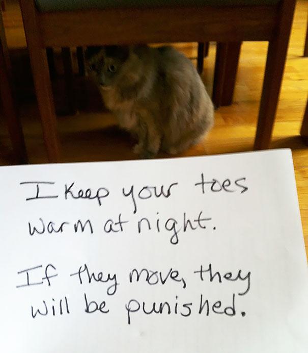 naughty-cats-12