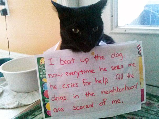 naughty-cats-13