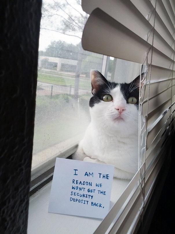 naughty-cats-17