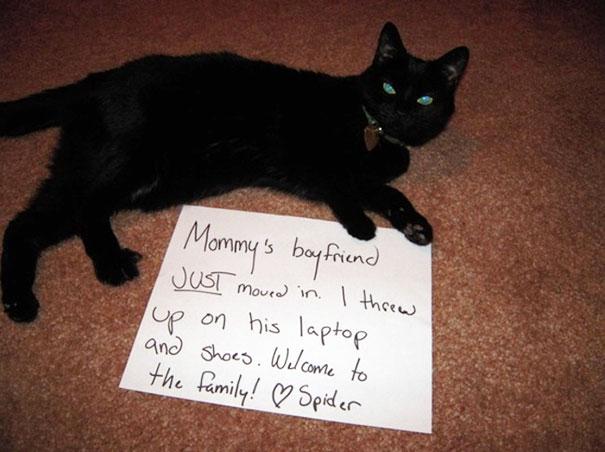naughty-cats-24