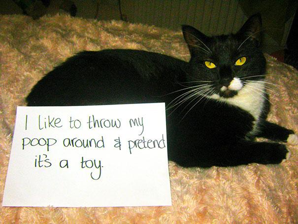 naughty-cats-25