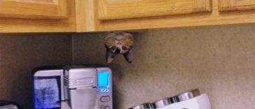 ninja-cat-hiding-funny-fb