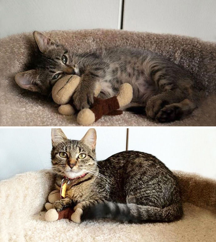 pets-growing-up-with-toys-13