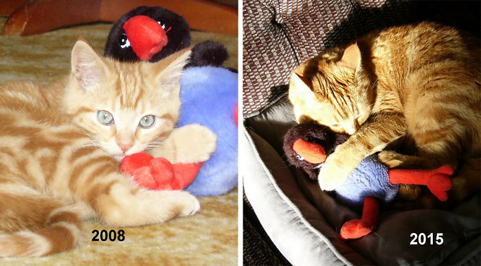 pets-growing-up-with-toys-14