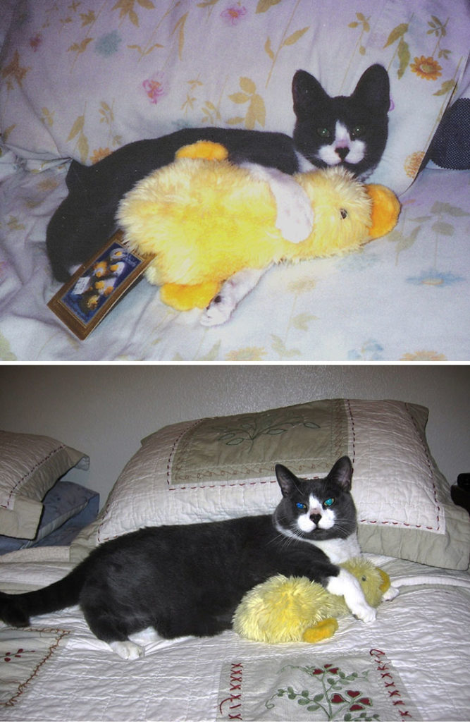 pets-growing-up-with-toys-21