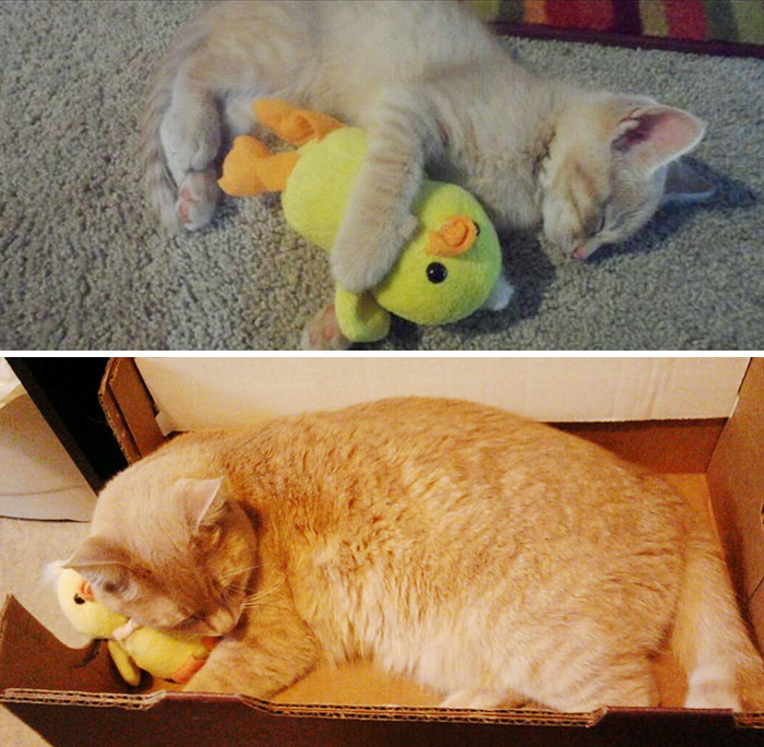 pets-growing-up-with-toys-3