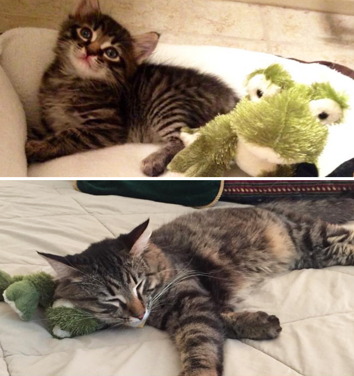 pets-growing-up-with-toys-4