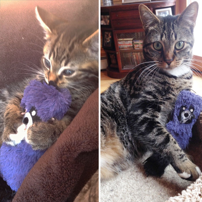 pets-growing-up-with-toys-9