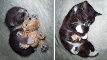 pets-growing-up-with-toys-fb2
