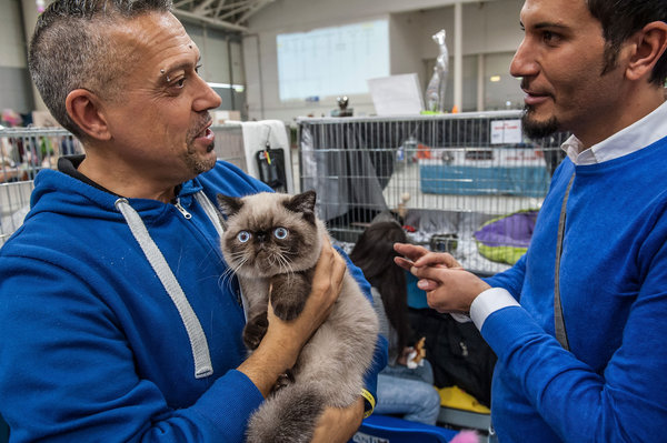ROME, ITALY - OCTOBER 31: A cat is in the arms of his owner as he waits to be examined by the jury during the Super Cat Show 2015 on October 31, 2015 in Rome, Italy. The Super Cat Show, which takes place at Fiera di Roma every year, involves the participation of 800 cats of different breeds from all over the world. (Photo by Giorgio Cosulich/Getty Images)