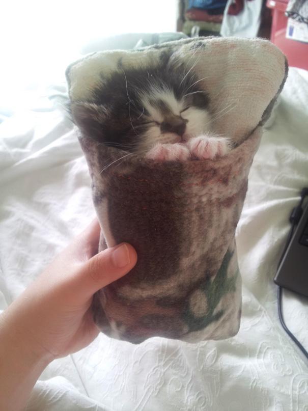 sleeping-kitties-10
