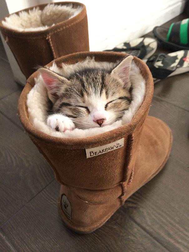 sleeping-kitties-13