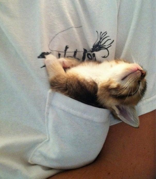 sleeping-kitties-19