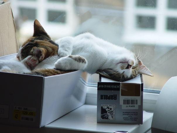 sleeping-kitties-20