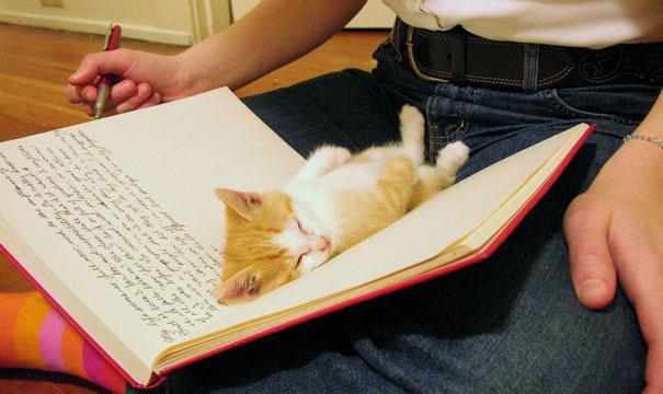 sleeping-kitties-27