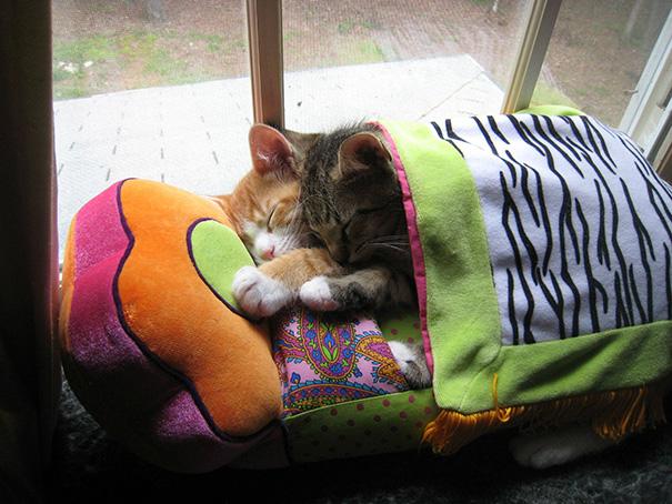 sleeping-kitties-6